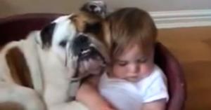 Hunden - menneskets beste venn