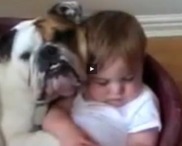 hunden_menneskets_beste_venn_video2