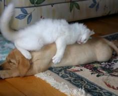 hund_katt_1
