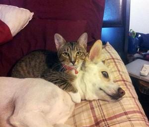 hund_katt_14