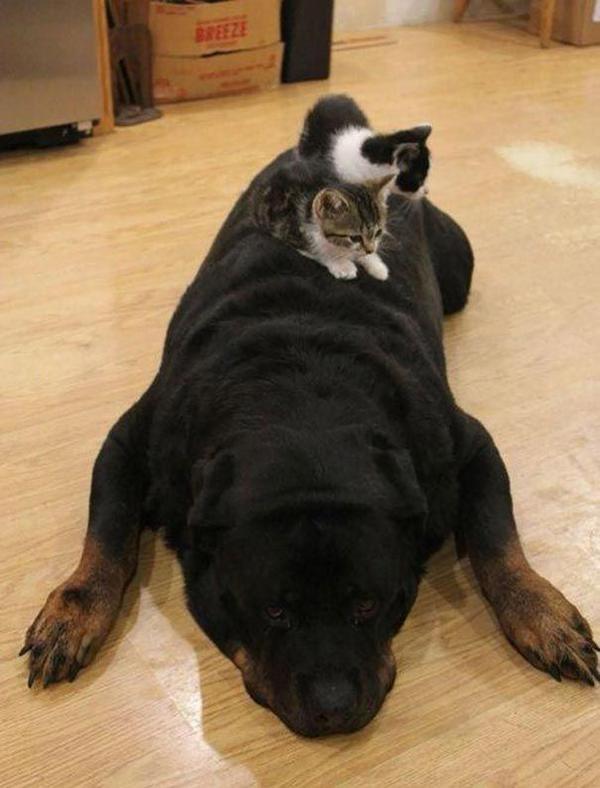 hund_katt_2