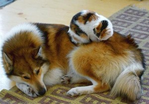 hund_katt_8