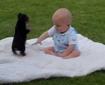 hund_barn
